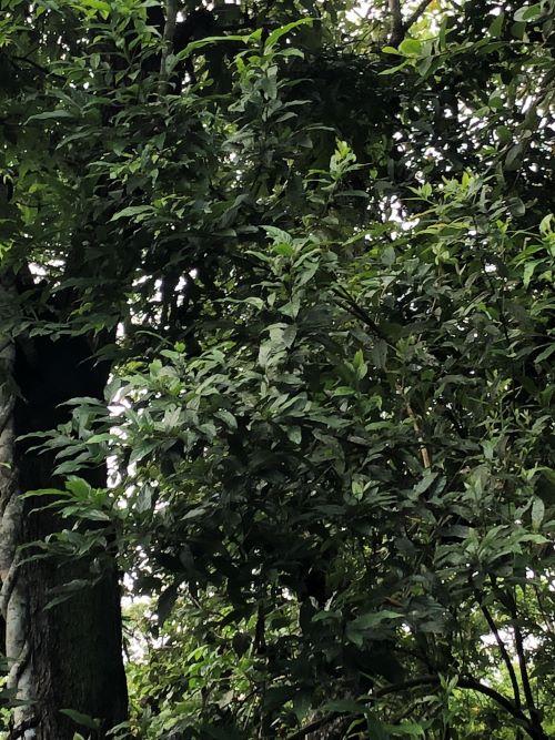 黑熊在哪裡