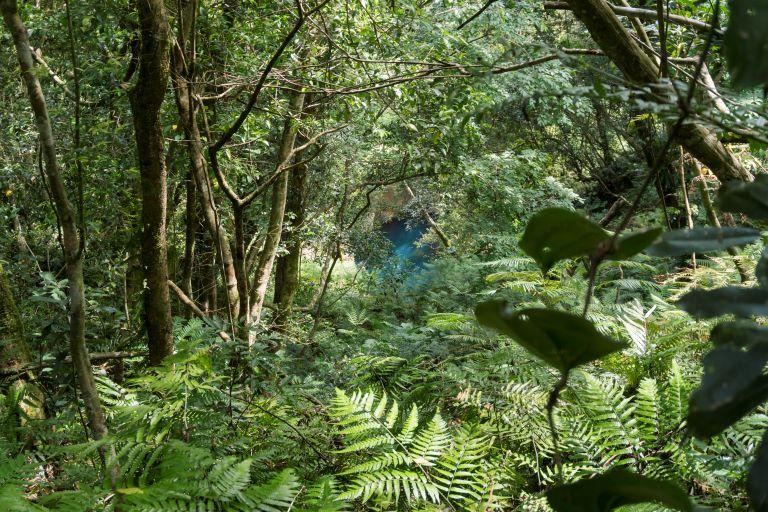 過溪後林相