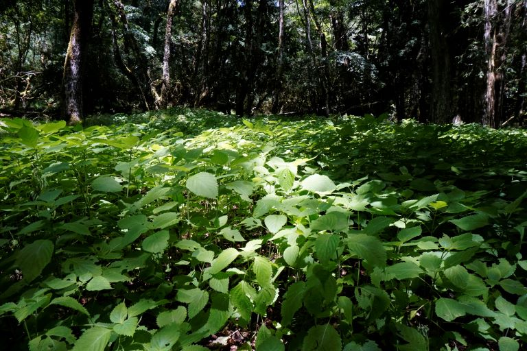 大濁水南溪岸上植被