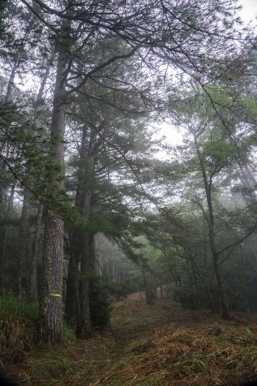大小劍天梯路上林相