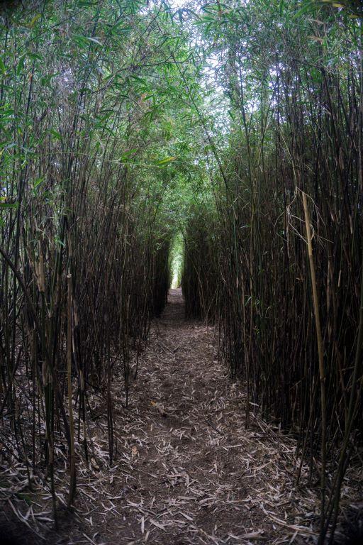 箭竹林-神奇隧道