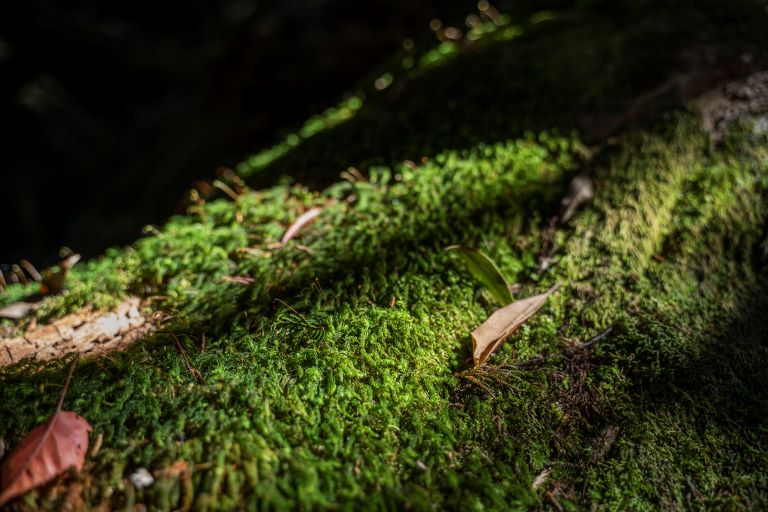 塔魔巴-植物