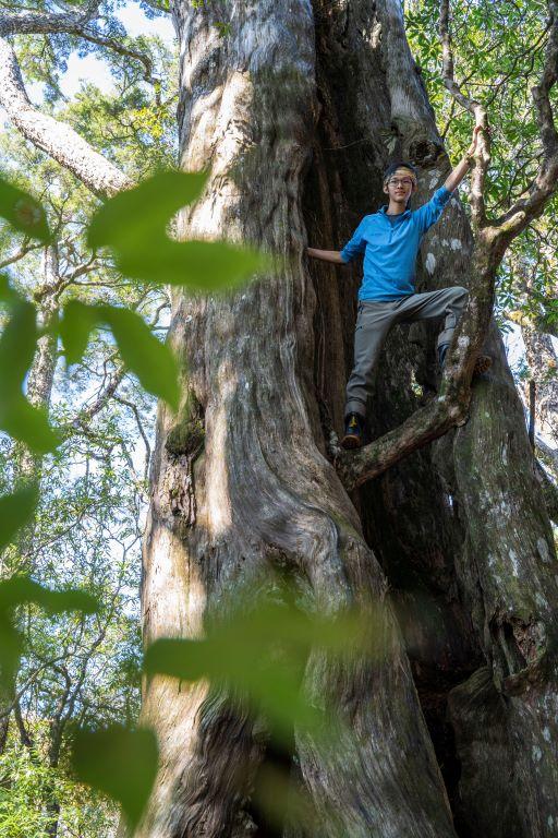 塔魔巴-樹中樹