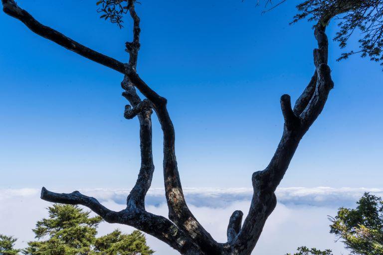 塔曼山後展望點雲海