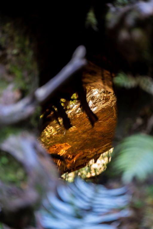 大樹牆的洞